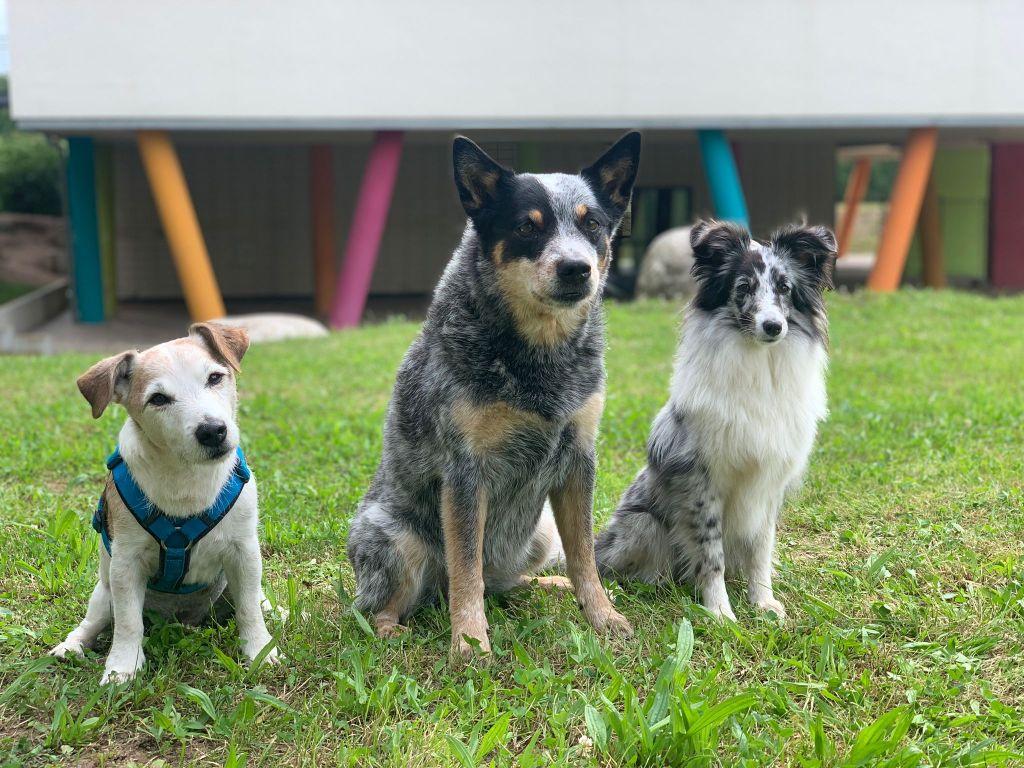 Schulhunde